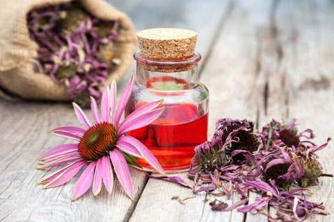 Overview of echinacea's herbal health benefits.