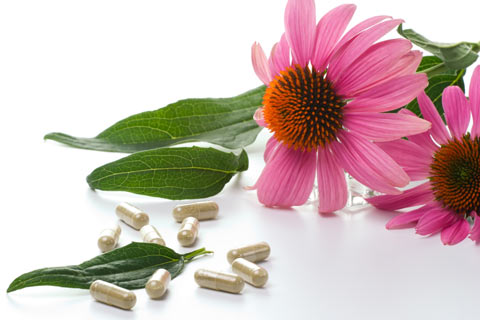 Echinacea is one of the most popular herbal supplements in Germany and the United States.